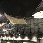 神奈川県立生命の星・地球博物館をご存知ですか?